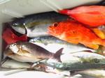 釣り魚1月20日1.jpg