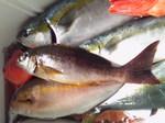 釣り魚1月20日3.jpg